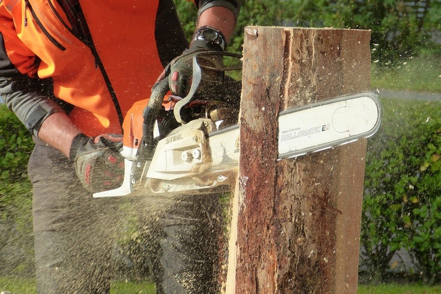 Tips To Search For And Select The Most Reliable Arborist To Care For Your Trees